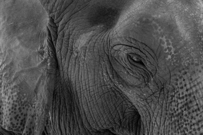 elephant-animal-thailand-big-animal-ayutthaya-elephant-klein